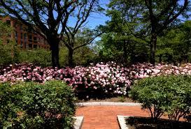 two boston rose gardens landscape noteslandscape notes