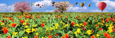free images nature sky field meadow dandelion prairie