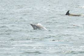twelve amazing photos of dolphins spotted near greenwich harbor