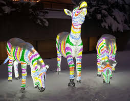 Zoo Lights Hours Chicago by Winter Just Shy Of Pretty