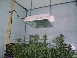 1000 watt hps light anesthesia f1 and twisted shack sannie s corner opengrow