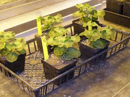 How To Plant A Garden In Your Backyard Starting Seeds Indoors Yard And Garden Garden University Of