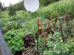 Creative Vegetable Gardens by 24 Best Gardening Images On Pinterest Gardening Veggie Gardens