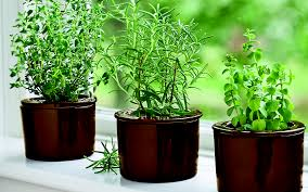 indoor windowsill planter best herbs for growing indoors gardener s supply
