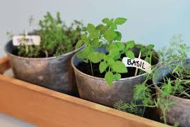 Herb Window Box Indoor Garden Increasing The Design Composition By Growing Herbs Indoor