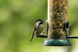 wild bird feeding u2013 how to attract birds in the garden