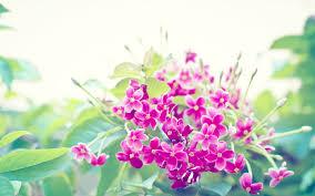 34 units wallpaper floral