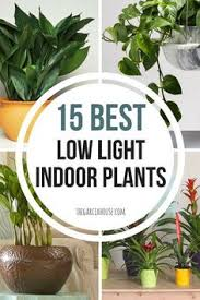 houseplants that need little light 23 low light houseplants that are easy to maintain and nearly