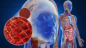 Anatomy And Physiology Skeletal System Test Skeletal System Parts And Functions How Does The Skeletal System