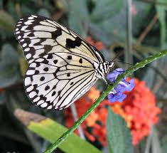 butterfly gardens how to build a garden that will attract
