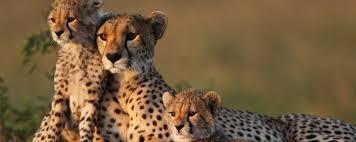 african safari animals luxury african safari lodges where to stay on safari art of safari