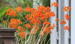 native south florida plants gardening 12 plants for south florida gardens sun sentinel