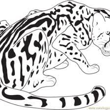 cheetah print coloring pages amazing cat free cheetah