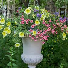 the flowers of summer at summer at blumen blumen gardens