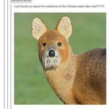 Oh Deer Meme - images about deermeme tag on instagram