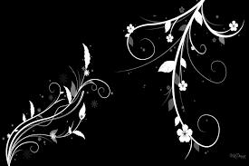 imagenes blancas en fondo negro flores blancas en un fondo negro 78904