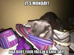 Monday Cat Meme - monday cat meme 104 1 wiky