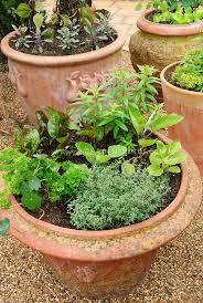 Indoor Vegetable Container Gardening - garden design garden design with creating a container herb garden