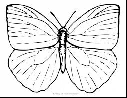 astounding butterfly coloring pages with butterfly coloring page
