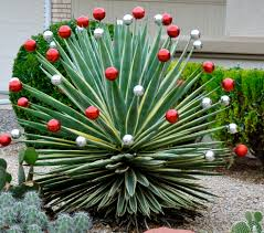 outdoor christmas decorations arizona style adventures of a
