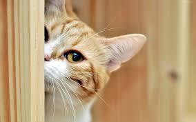 imagenes de gatitos sin frases como cuidar un gato de 1 mes y llegue a ser la mascota perfecta