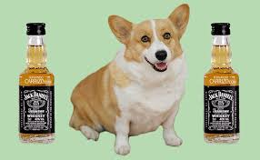Queen Corgis 7 Things You Probably Didn U0027t Know About The Queen U0027s Corgis
