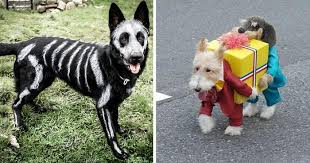 costumes for dogs 58 pets at home dog costumes 20 adorable diy pet costume