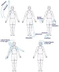Anatomy And Physiology Introduction To The Human Body 18 Best Dance Anatomy Images On Pinterest Anatomy Planes And