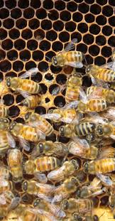 8 best ccd lesson images on pinterest bee keeping honey bees