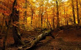 fantasy autumn wallpaper forest autumn wallpaper 6953172