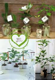 plant wedding favors tree wedding favors