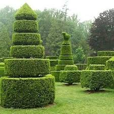 28 best topiary option images on topiaries topiary