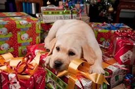 pawfect presents guide dogs nsw act