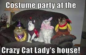 Crazy Cat Meme - costume party at the crazy cat lady s house funny party meme image