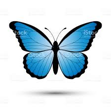 blue butterfly isolated on a white background stock vector