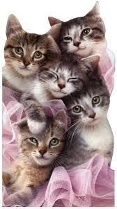 group of kittens cat birthday card by avanti press