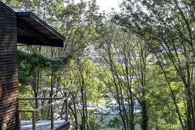 homes built into hillside contemporary treehouse in ravenna listed for 800k curbed seattle