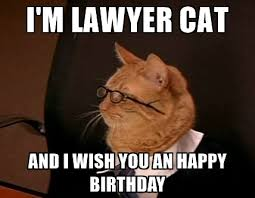 Lawyer Cat Meme - lawyer birthday meme joke image 15 quotesbae