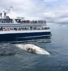 Whale Watches Cape Cod - whale watching sharks ginny g cape cod fishing charters
