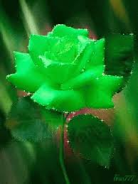 green roses flowers green gif flowers greenrose discover gifs