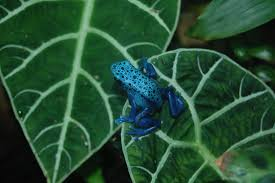 native plants in the amazon rainforest top 10 most dangerous amazon rainforest animals