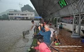 cara membuat umpan mancing ikan mas harian cara membuat umpan ikan mas harian musim hujan paling jitu untuk