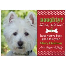 dog christmas cards pet photo christmas cards stuff to buy