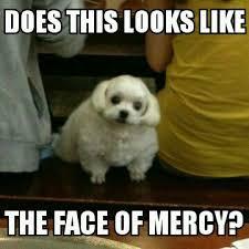 Chubby Meme - chubby dog is chubby