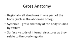 Anatomy And Physiology Midterm Exam Anatomy And Physiology For Yoga Students