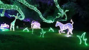 zoo lights houston 2017 dates pretty lights and dancing rhinos houston zoo lights 2017 youtube