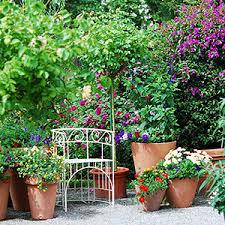 topfpflanzen balkon kübelpflanzen für balkon und terrasse sonne halbschatten schatten