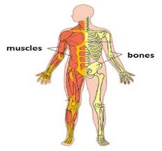 Human Anatomy And Body Systems Human Body Systems Lesson For Kids Study Com