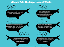 a whale u0027s tale the importance of networks of mpas cpaws