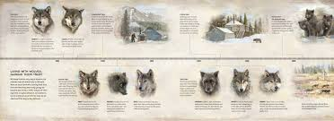 meet the pack living with wolves